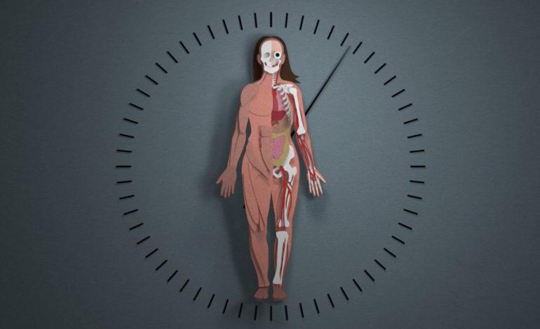 از حقیقت تا شایعه… تولد چندباره بدن انسان در طول حیات