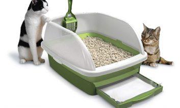 چرا گربه من از جعبه بستر خود استفاده نمیکند؟