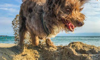 فینالیستهای مسابقه عکاسی طنز از حیوانات خانگی