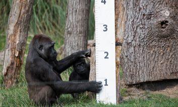 آغاز وزنکشی سالانه حیوانات در باغ وحش لندن