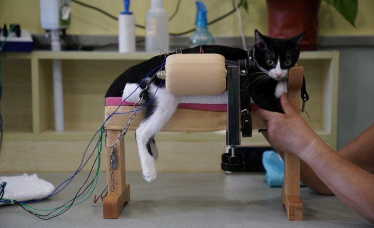 عجیب اما واقعی: طب سوزنی حیوانات خانگی در چین!
