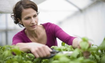 چه طور سبزیجاتمان را هرس کنیم؟