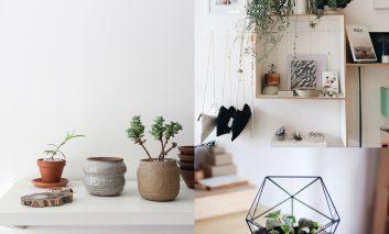 برای گیاهانتان گلدان انتخاب کنید!