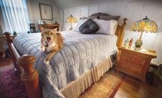 فوتوفن مراقبت از تختخواب و ایمن کردن آن در برابر گربه خانگی