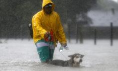 نجات حیوانات خانگی از سیل ویرانگر هاروی