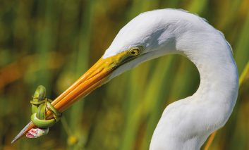 مسابقات برترین عکاس پرندگان
