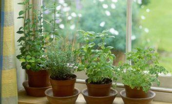 در فصل زمستان سبزی پرورش دهیم!