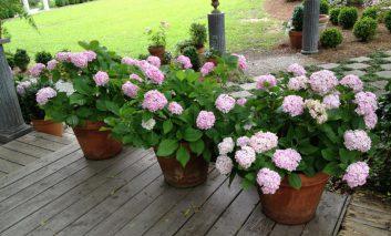 نکاتی برای باغبانی در سایه