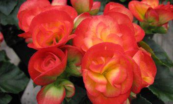 گیاهی که در زمستان گل میدهد!