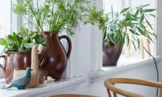 فوت و فن هرس گیاهان آپارتمانی!