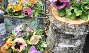 چه گیاهی برای چه گلدانی؟