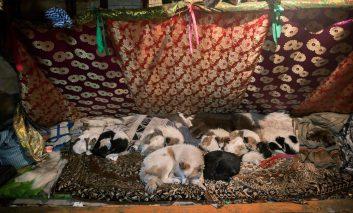 قبیله عشایری خونآشام در سیبری!