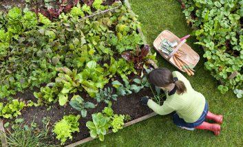 کشاورزی ارگانیک در خانه!