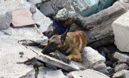 سگهای امدادرسان؛ نجاتبخش زلزلهزدگان مکزیک