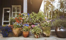 ۵ نکته برای داشتن گیاهان گلدانی سرحال