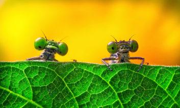 برترین تصاویر مسابقه عکاسی زیستشناسی در انجمن سلطنتی لندن