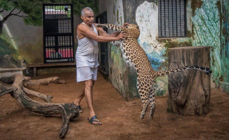 کشتی حیوانات؛ یتیمخانهای برای حیوانات بی سرپرست!