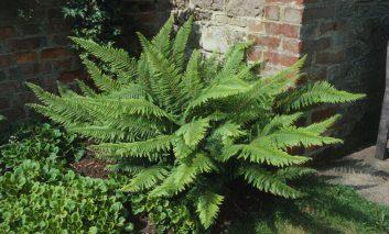 این گیاه خانگی جدید را میشناسید؟