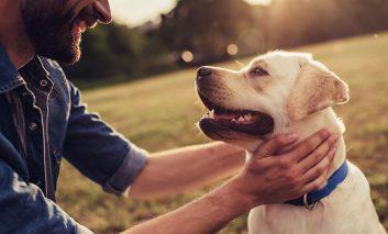 چطور سگمان را شاد نگه داریم؟
