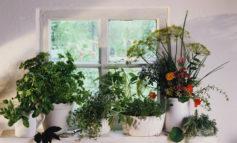 ۸ اشتباه در پرورش سبزیجات