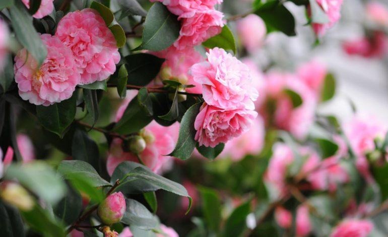 گلی برای فصلی سرد
