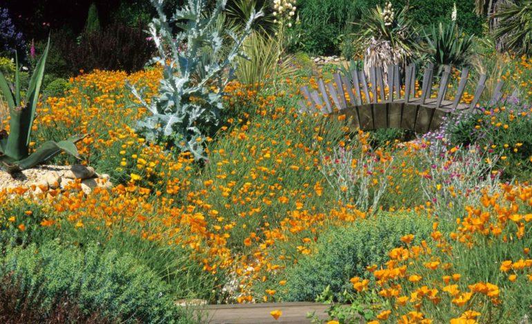 گلهایی بدون نیاز به آبیاری!