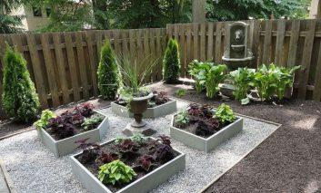 چند گیاه باغچهای نامیرا!