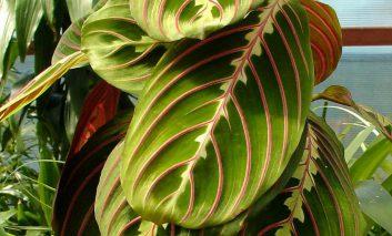 گیاهی به رنگ بهار