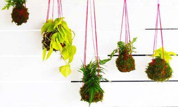 کوکدامام، گیاهانی روی هوا!
