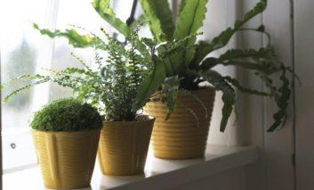 نور طبیعی برای گیاهان خانگیام