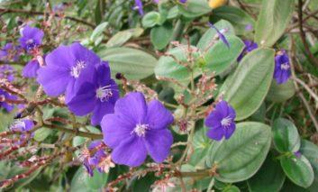 گیاهی از دریای کارائیب!