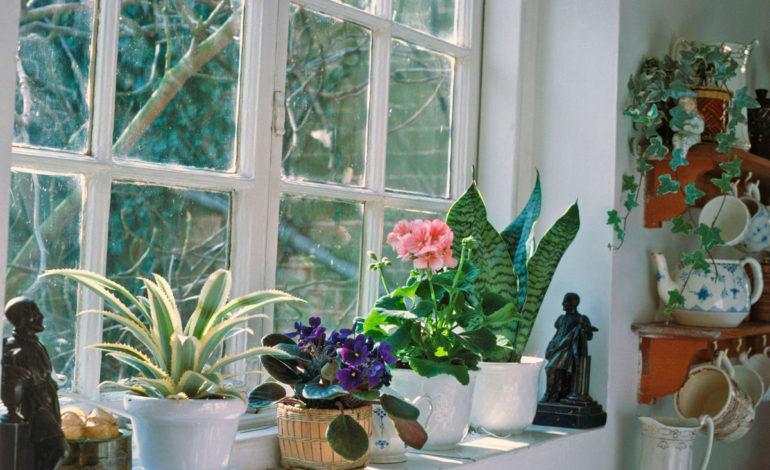 ۵ نکته برای زمستان گذرانی گیاهان!
