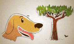 دنیا از دیدگاه بینی سگ