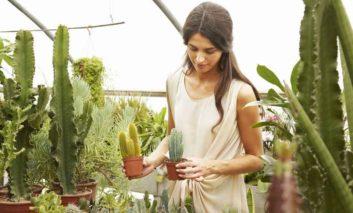 ۵ قانون اصلی پرورش ساکولنت