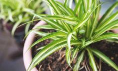 این ۱۰ گیاه، هوای خانهتان را تصفیه و سمزدایی میکنند!