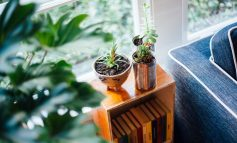 چرا گیاهان خانگیام میمیرند؟!