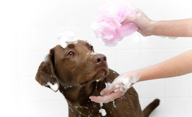 این کارها را انجام ندهید، سگتان از آنها متنفر است