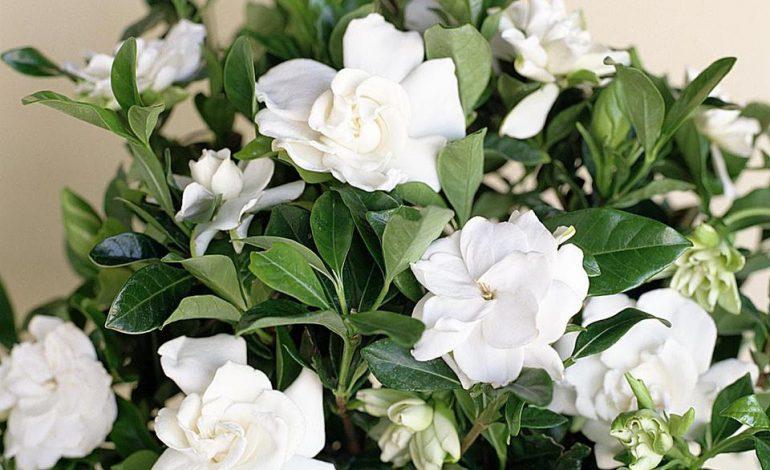 گلهایی با شکوه برای خانه