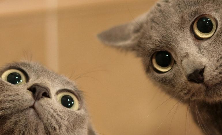 افسانههایی درمورد گربهها