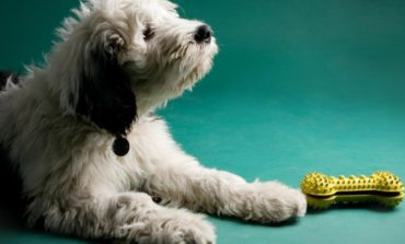 ۸ حقیقت که سگتان راجع به شما میداند!