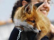۸ حیوانی که هرگز نباید به عنوان حیوان خانگی نگه دارید