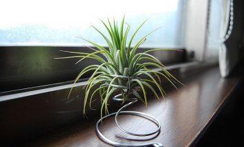 ۱۳ ایده برای نمایش گیاهان هوازی