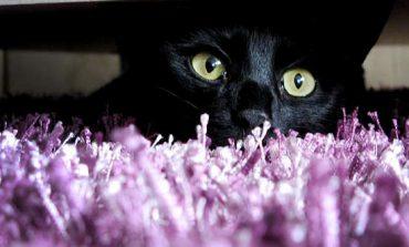 ۷ بازی که گربهتان دیوانهاش میشود!