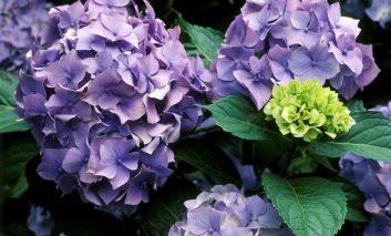 بهترین گلها برای افراد مبتلا به آلرژی