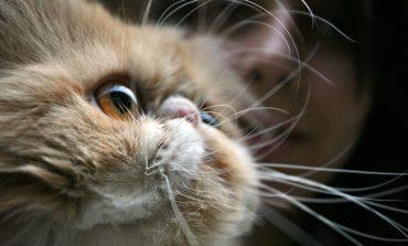 قضیه سبیل گربه چیست؟