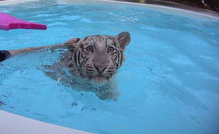 شنا با حیوانات وحشی در باغ وحشی در فلوریدا!