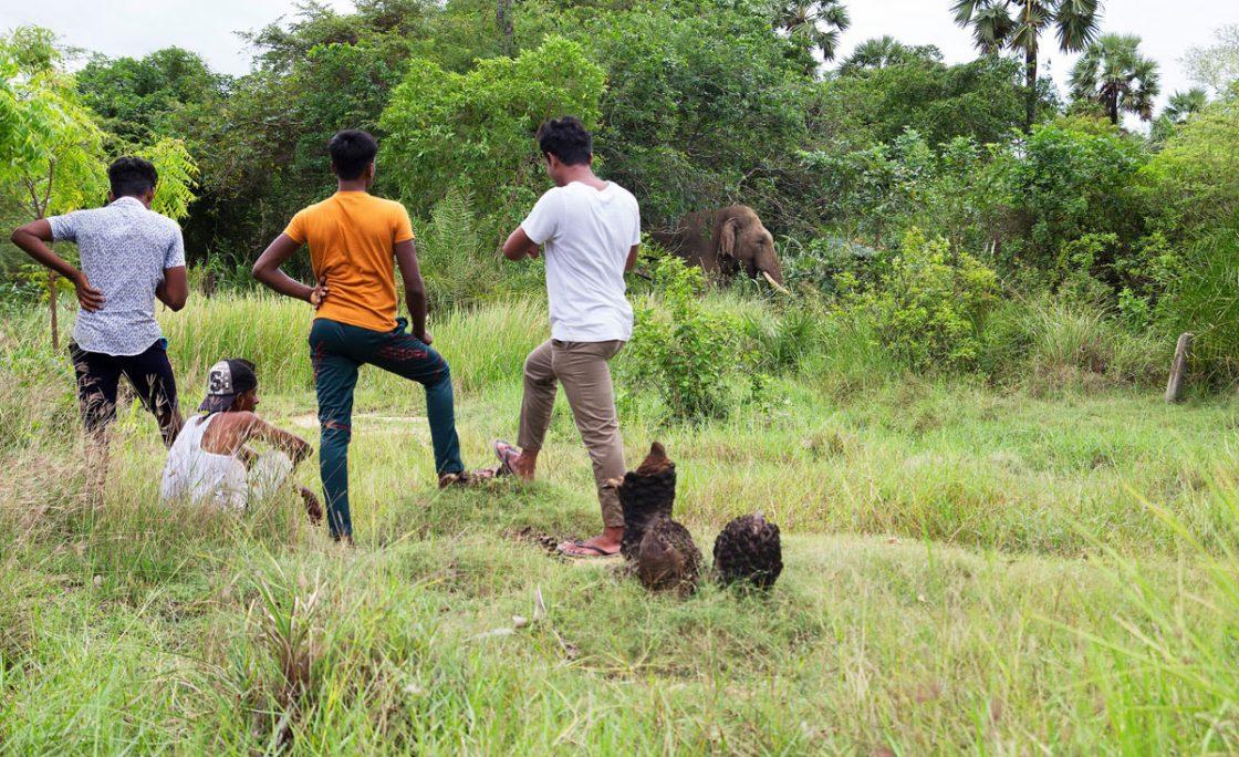 همزیستی مسالمتآمیز با فیلها… ممکن یا محال؟