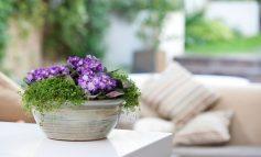 ۱۲ گیاهی که حتما باید در خانه داشته باشید