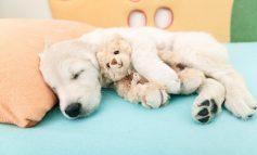 سگها خواب میبینند؟