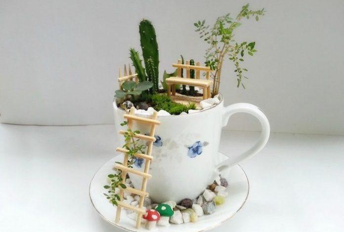باغچهای درون فنجان!